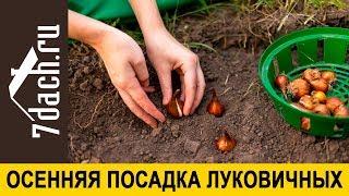 🌷 Сажаем луковичные цветы осенью: не пропустите сроки! - 7 дач