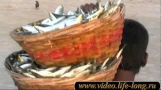 Рыбалка на Гоа. Индия. Пляж Беталбатим. Fishing in Goa.(Не дошла к счастью до местных рыбаков техническая революция. Лодки из досок с распорками и сделанным из..., 2011-02-09T17:52:42.000Z)