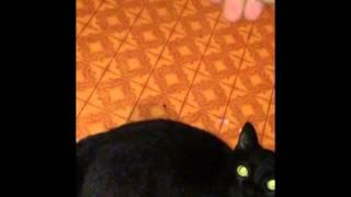 Чёрная кошка Алиса нападает