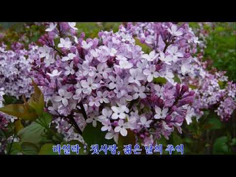 꽃말 모음