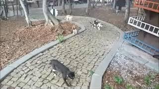 Kedi Kasabası,Samsun