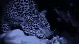 BBC: Leopard Domain - Elephant Cave
