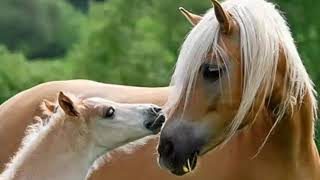 Очень милые фото лошадей и жеребят😗😗😗