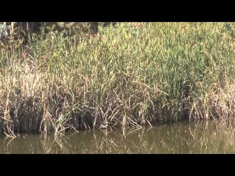 Discover the Wetlands at Fountain Creek Nature Center