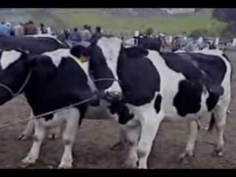 SAN GABRIEL MONTÚFAR - CARCHI - ECUADOR - 2002