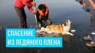 В Забайкальском крае спасли собаку, которая вмерзла в лед озера Кенон задними лапами и хвостом
