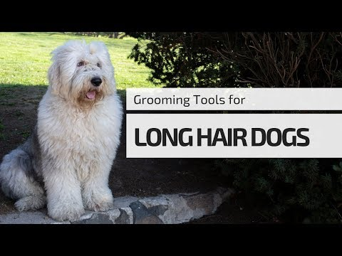Undercoat Rakes⎥Tools You NEED for Grooming Your Long Hair Dogs┃Ed&Mel