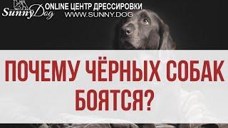 Синдром чёрной собаки или почему чёрных собак боятся больше остальных?