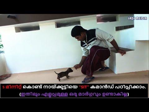 dog training : sit command Malayalam : kerala dog training : വളര്ത്തു നായയെ പരിശീലിപ്പിക്കാം