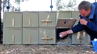 Free Bowling Alley Lockers Repurposed Into Chicken Nesting Boxes