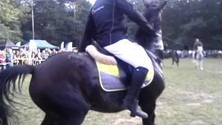 Pogoń za lisem - niebezpieczny koń- akcja w 16 sek - Hubertus Świętokrzyski 2015