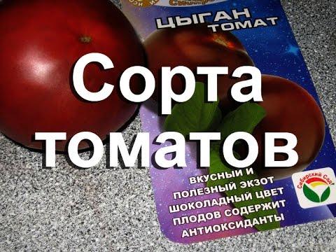 Томаты в теплице, помидоры в теплице Лучшие сорта, отзывы