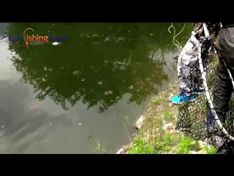 Trout Fishing At Lake Como Italy