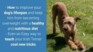 ***How To Housetrain Irish Terriers - FREE Mini-Course*** | How To Potty Train A Irish Terrier Puppy