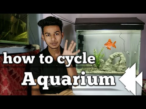 How to cycle aquarium