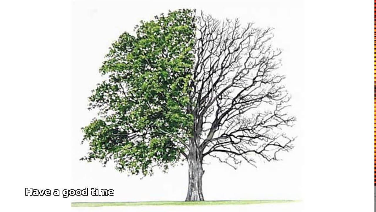 Hardwood Trees Gallery