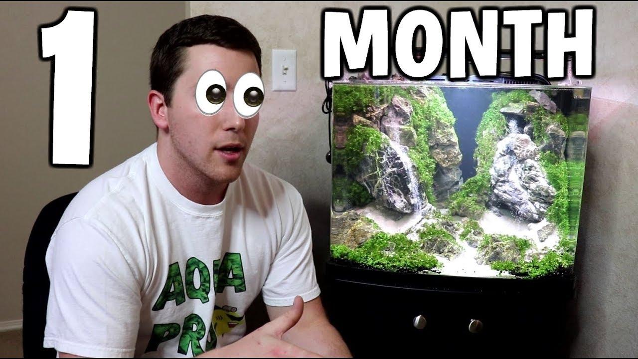 1 month update sand waterfall aquarium youtube
