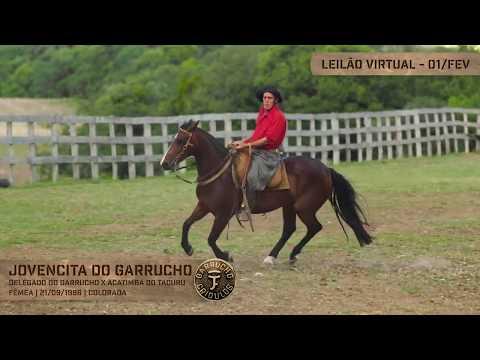 Lote 25 - Jovencita do Garrucho