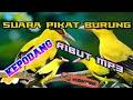 Suara Pikat Burung Kepodang Ribut  Mp3 - Mp4 Download