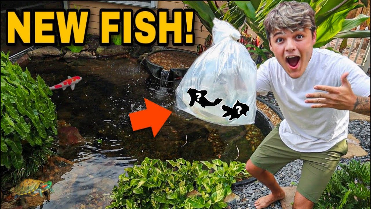 BUYING NEW *COLORFUL* FISH for My OLD BackYard PONDS!!