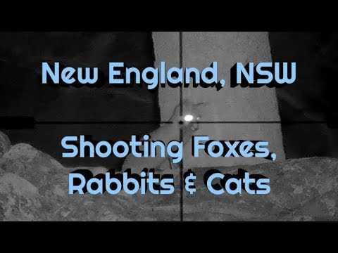 ATV Hunting Australia - Fox Rabbit & Feral Cat Shooting In The New England, NSW, Australia