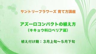 Repeat youtube video サントリーフラワーズ 育て方講座「アズーロコンパクトの植え方」 3分48秒