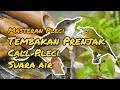 Masteran Pleci Tembakan Prenjak Call Pleci Suara Air  Mp3 - Mp4 Download
