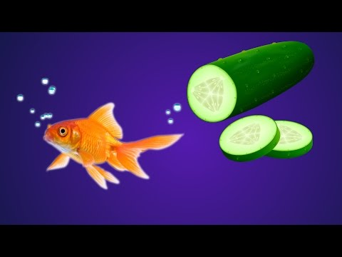 How To Feed Fish Cucumber/Zucchini