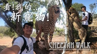 【南非9】帶著獵豹散步囉!!! Cheetah walk in Johannesburg!!!