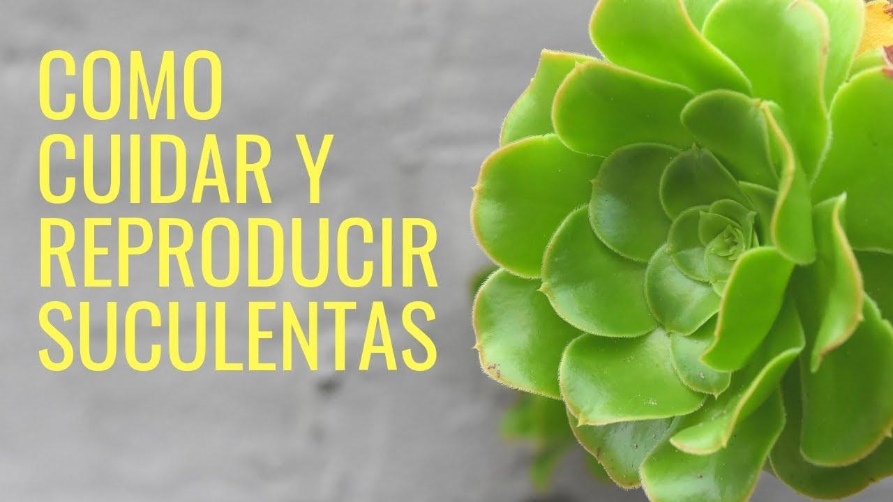 Como Cuidar Y Reproducir Suculentas 2021 Cactus Manos De Tierra Youtube