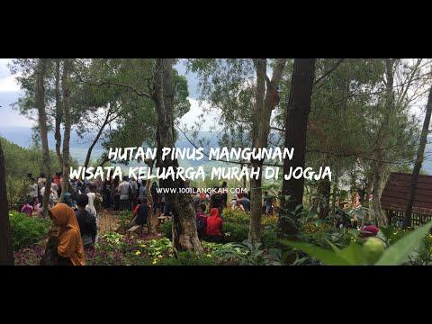 hutan-pinus-mangunan,-wisata-keluarga-murah-di-jogja
