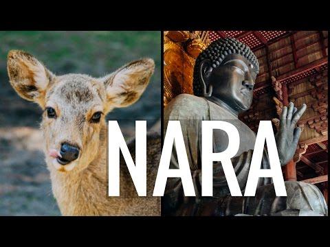 NARA + OSAKA // Playing with deer, Todaiji Temple, & Umeda Sky Building