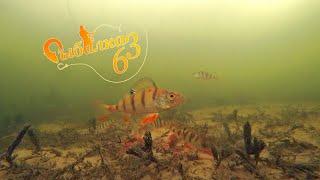 Подводная съемка ловли окуня зимой Интересные подводные съемки в прозрачной воде