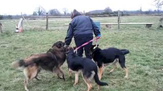 educ passion jeux canins