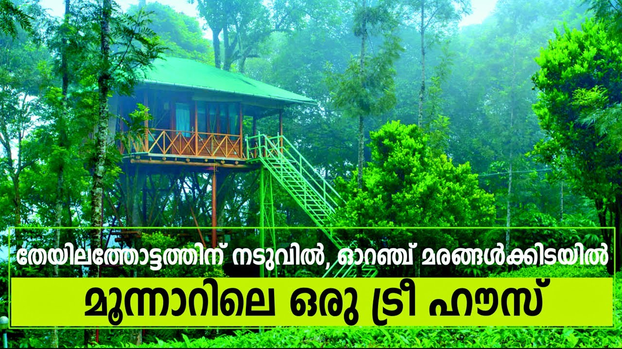 Best Tree House Resort In Munnar Visit Dream Catcher Plantation Resort To Make Your Stay Memorable