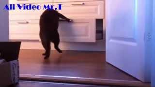 Funny Videos, Funny Cat Videos, Cat Video, Funny Animals, Funny Cat Video 2015