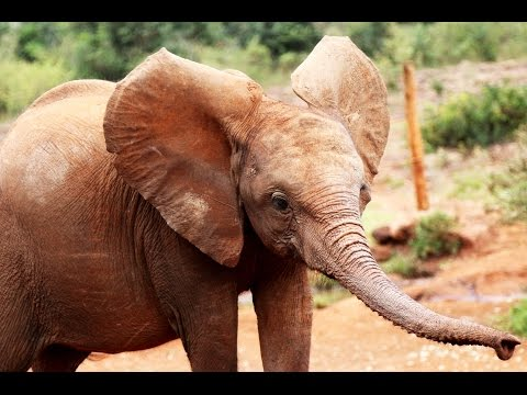 Daphne Sheldrick elephant orphanage & Nairobi