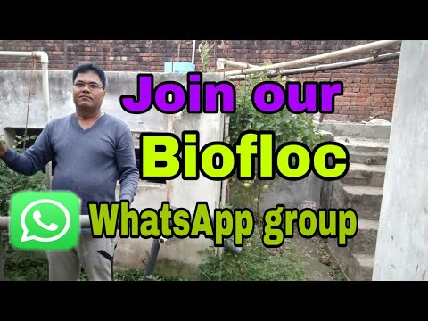 Join our Indian biofloc WhatsApp group - YouTube