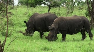Safari in the Kruger National Park (South Africa)