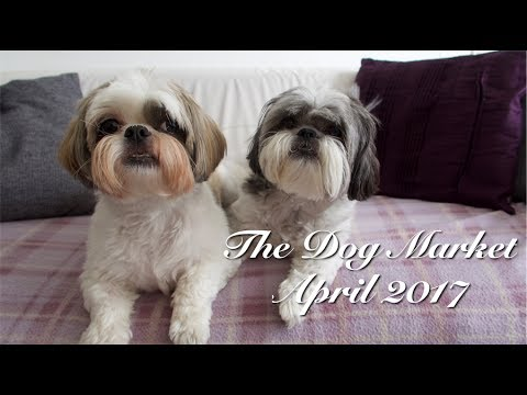 The Dog Market April 2017
