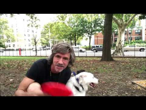 Frisbee Dog info why Size matters,  Birds don;t eat Cheese, Barkbox