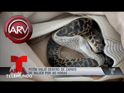 Super Martinez - Mujer Encuentra un Piton en su Zapatos que Estuvo por 40 Horas