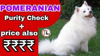 Pomeranian Dog Purity Check & price In Telugu By Taju logics