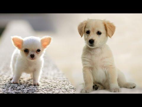 Раз собака, два собака... - Наталия Лансере / Dog... children's song!