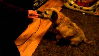 Training Your Dogs For A Veterinary Examination: Step 1