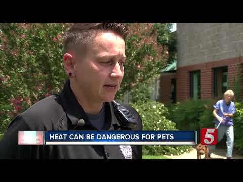 Heat can be deadly and dangerous for pets