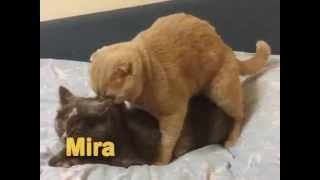 Trimax Cats İstanbul Life Çabuk Mart Bitmeden