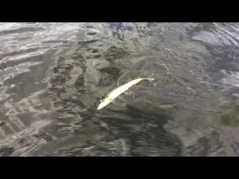 Buck Lake Solo Camp/fish