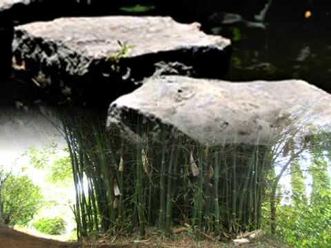 lỡ bước sang ngang  Nguyễn Bính
