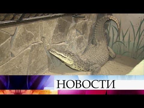 В городе Батайске незыблемый авторитет крокодила используют в воспитательных целях.
